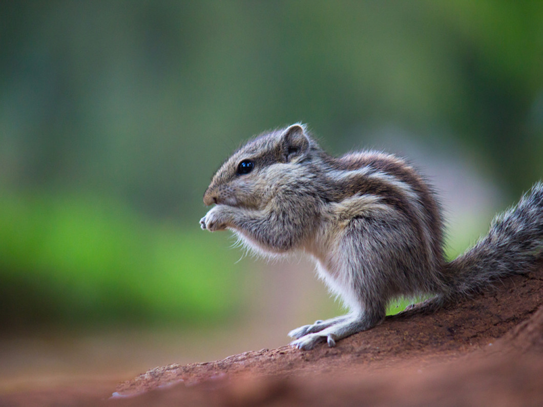 Wildlife Control in Florida, Rodent Solutions Inc